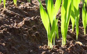 Saat und Bepflanzung