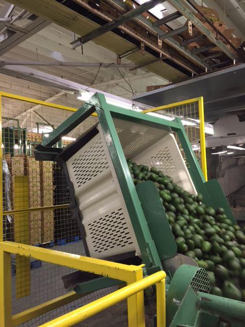 Behälter Für Kartoffeln Für Zwiebeln äpfel Zitrusfrüchte 44p
