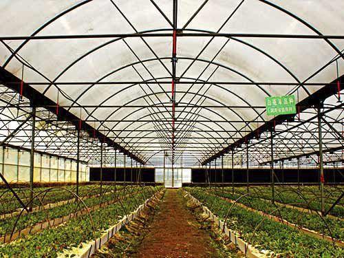Gewachshaus Mit Tunnel Stahlstruktur Glas Kunststoff Qixin