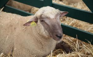 Ganadería ovina, caprina y equina