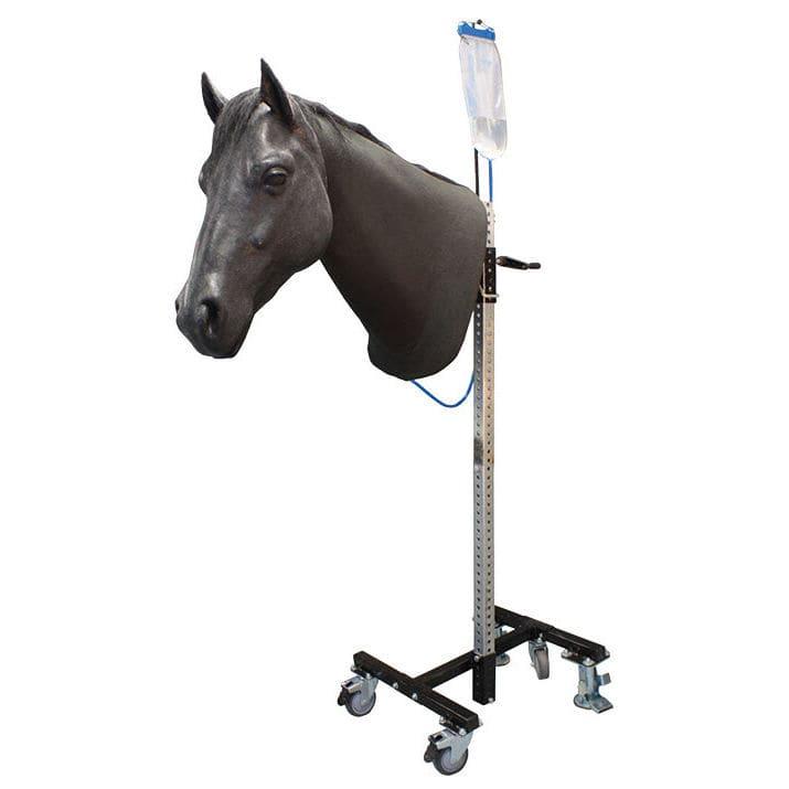 Maniquí para prácticas veterinarias para caballos / cabeza - IM ...