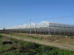 invernadero multicapilla / de producción / estructura de acero / con canalón