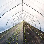 invernadero de túnel / de producción / de plástico / temporal
