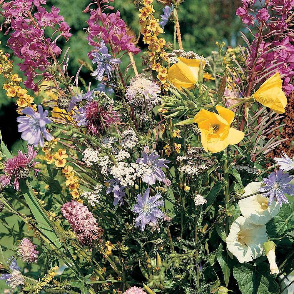 semence pour jardin