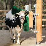 brosse stationnaire / pour vaches / horizontale / verticale