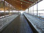 tapis de sol en béton / pour élevage bovin / antidérapant