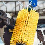 brosse stationnaire / pour vaches / pour chèvre / verticale
