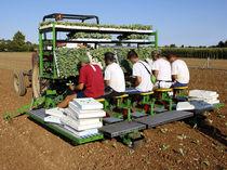 Lettuce transplanter / tomato / trailed / semi-automatic