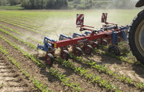Tractor-mounted row crop cultivator / weeding / fixed / disc