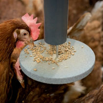 Poultry feeding system / tube / dry feed