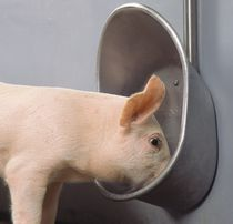 Swine drinker / bowl / stainless steel