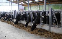 Cow headlock / tubular