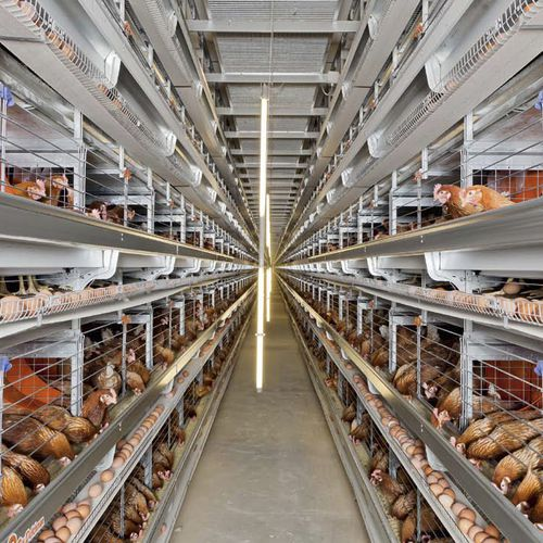 Layer rearing cage / with manure removal system / with egg belts / with ventilation system Eurovent EU Big Dutchman