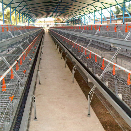 chicken rearing cage / with manure removal system / A-frame