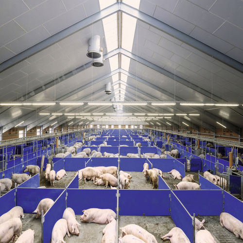 feeding system with management software / pig