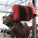 cow comfort brush / stationary / motorized / horizontal