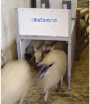 sheep identification system / automatic / inductive electronic