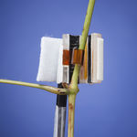 sap flow sensor / transpiration