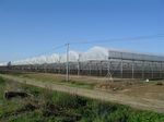 multi span greenhouse / commercial production / steel frame / with gutter