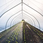 tunnel type greenhouse / commercial production / plastic / temporary