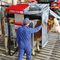 cows squeeze chute / hydraulic / mobile / hoof-care