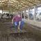 concrete floor mat / for cow breeding / non-slip