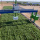 plant phenotyping robot / for open fields / automated / gantry