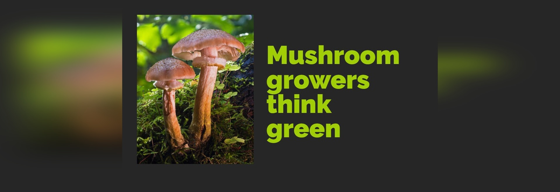 Organic mushroom growers are thinking green