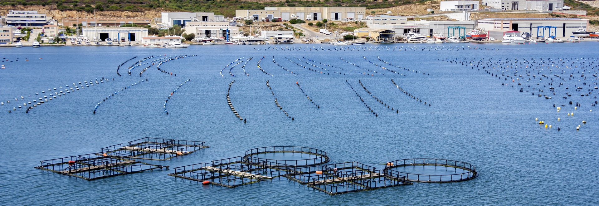 Recently published study evaluates potential for ocean farming