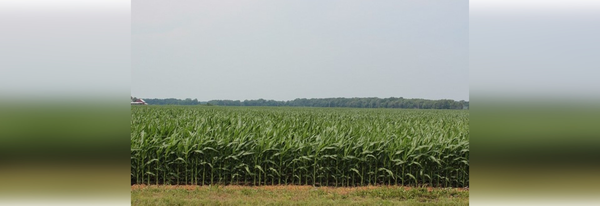 In Selecting Silage Hybrids, It's Best to Test