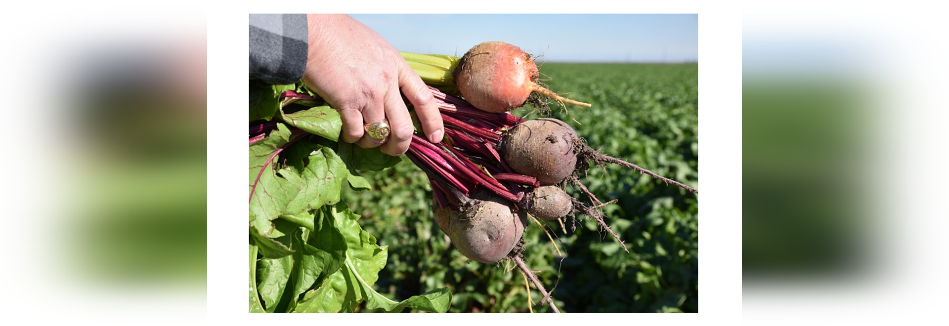 SunFed's Texas beets, onions ready soon