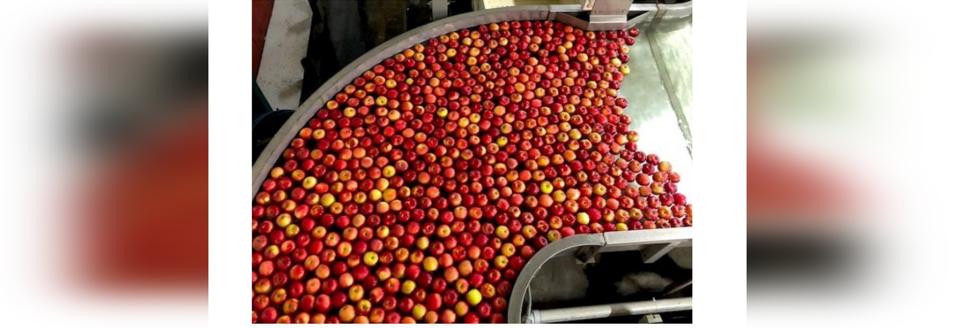Visitors in a private tour of Pomona Packing in Wolcott, N.Y., saw how the apple-sorting lines worked using new technology to streamline the sorting and packing process. Pomona started in 2010 to s...
