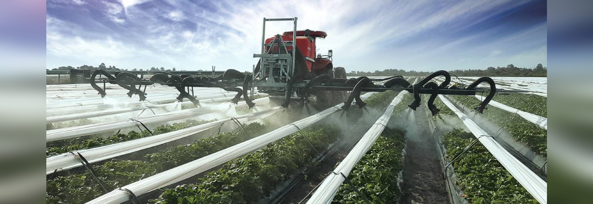 Western Australian strawberry producer, T&L Produce Marketing, recently utilised Silvan Australia to develop an air-assist spray solution for its 40 hectare farm at Gingin, north of Perth.