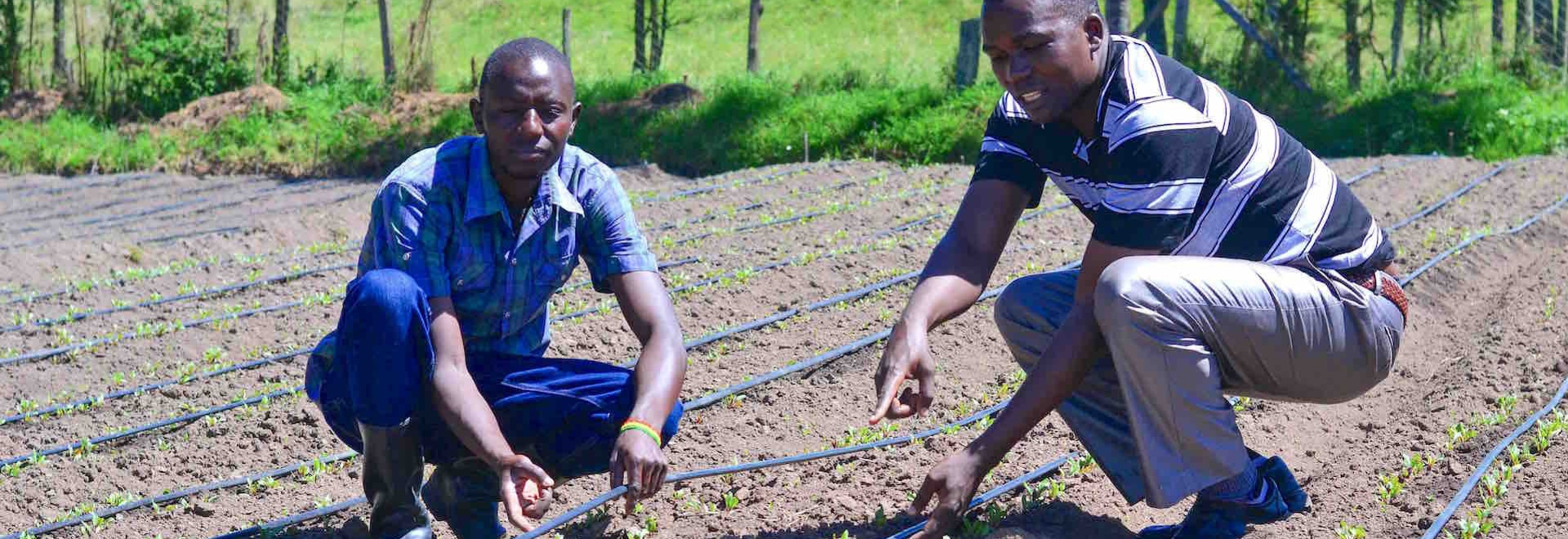 Young farmers in Zambia turning to digital technologies