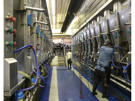 Experts Predict Another Challenging Year for Dairy Farmers