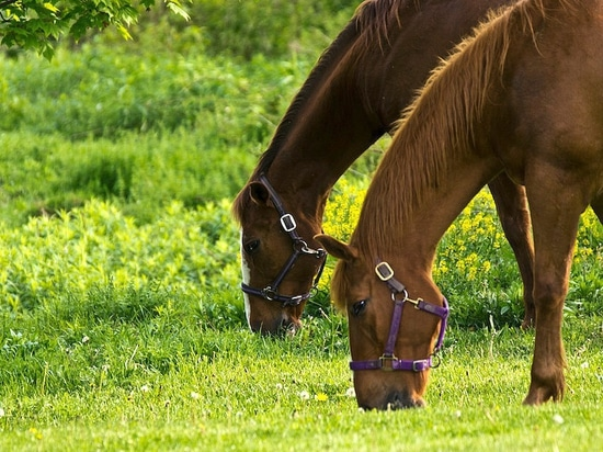Spring management tips for your horse pasture