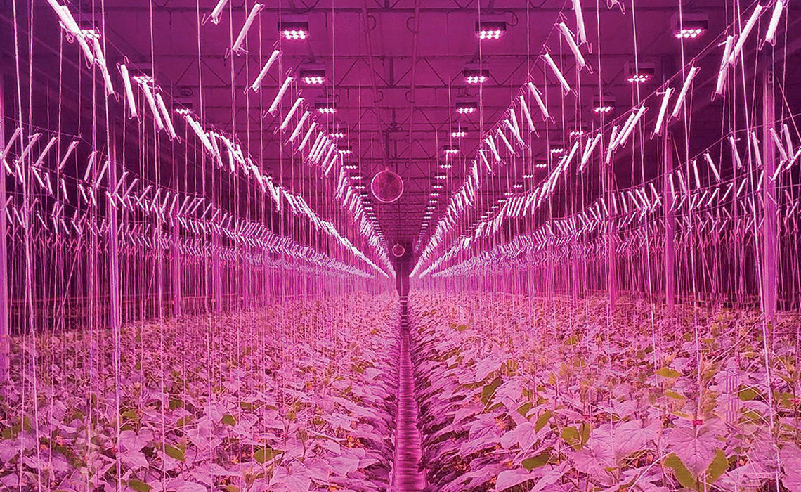 Illuminazione per serra led power harvest series illumitex