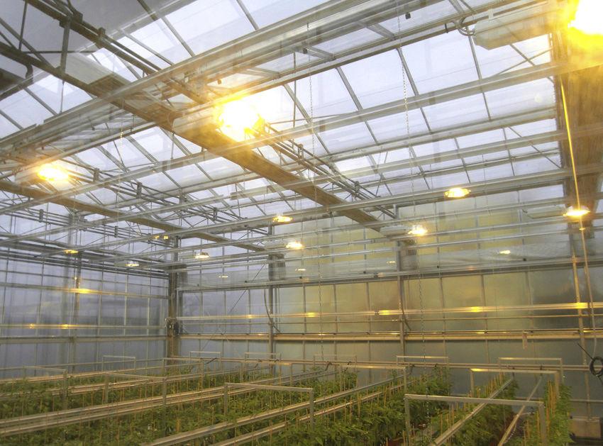 Illuminazione per l orticoltura idroterm serre
