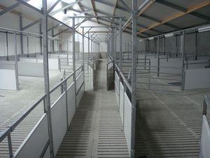 Capannone Per Bestiame Tutti I Fabbricanti Del Settore Agricolo