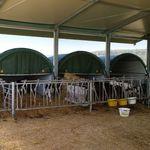 Cuccia per vitelli / condominiale / in acciaio / mobile  AGROTEL GmbH