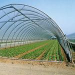 serra a tunnel monofalda / di produzione / con struttura in alluminio