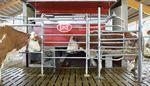Robot di mungitura per mucche / con sistema di pulizia / con distributore di cibo Astronaut Lely