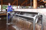 abbeveratoio per mucche / a canale / in acciaio inossidabile / multiaccesso