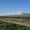 連棟ビニールハウス / 商業生産 / 鉄骨フレーム / 排水溝付きASYBARRE Barre