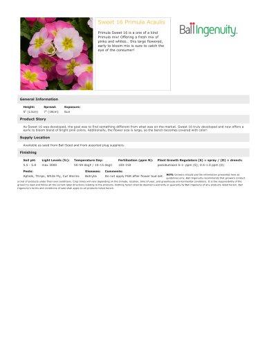 Sweet 16 Primula Acaulis