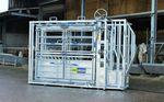 tronco de contenção para bovinos