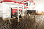 Melkroboter für Kühe / für Mehrfachstandplatz / mit Reinigungssystem / Dampfdesinfizierung