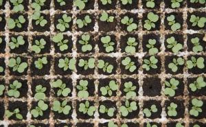 Semillas y Plantones