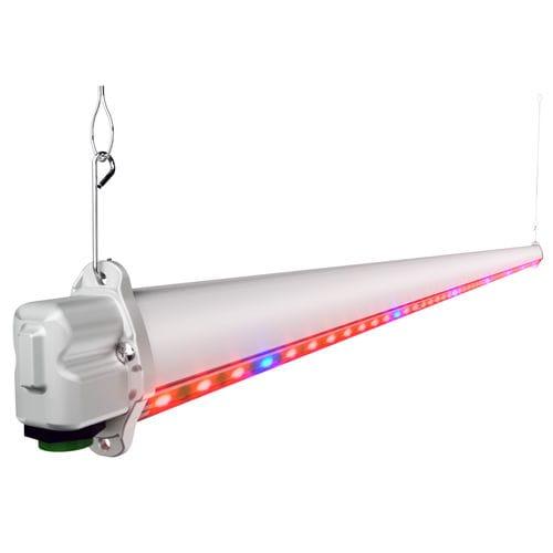 iluminación para la horticultura / LED / roja / azul