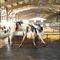 estera de caucho / para la ganadería bovina / antideslizante / higiénicoMAGELLAN 16 Aire d'attenteBioret-Agri